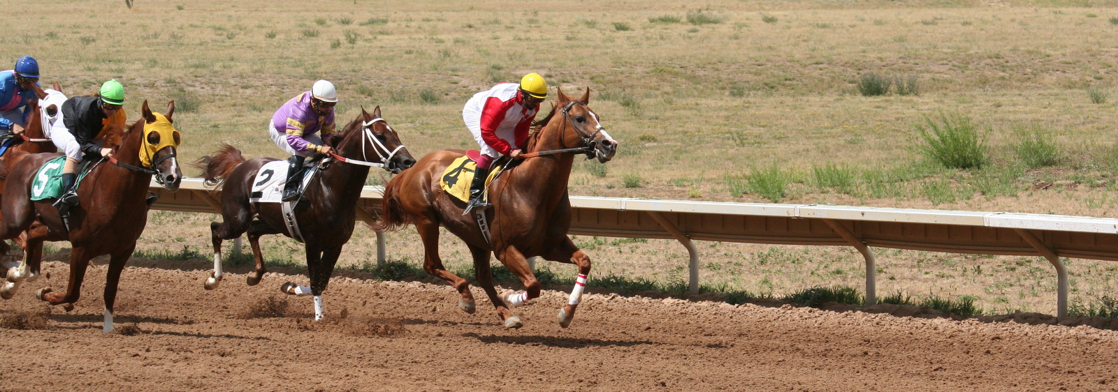 Arabians racing at Arapahoe Park